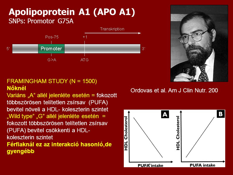 """Apolipoprotein A1 (APO A1) SNPs: Promotor G75A FRAMINGHAM STUDY (N = 1500) Nőknél Variáns """"A allél jelenléte esetén = fokozott többszörösen telítetlen zsírsav (PUFA) bevitel növeli a HDL- koleszterin szintet """"Wild type """"G allél jelenléte esetén = fokozott többszörösen telítetlen zsírsav (PUFA) bevitel csökkenti a HDL- koleszterin szintet Férfiaknál ez az interakció hasonló,de gyengébb Ordovas et al."""