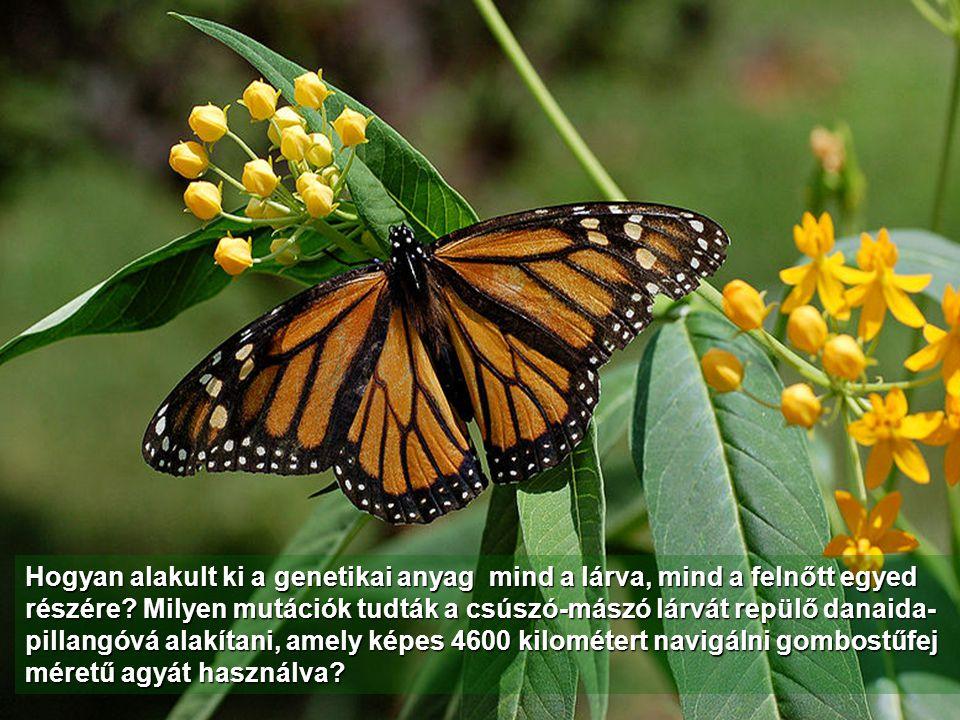 Egy pillangó születése