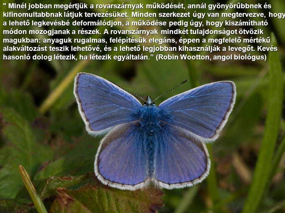 A rovarok eredetével kapcsolatban teljes sötétségben tapogatózunk. (Pierre Grassé, francia zoológus) A rovarok eredetével kapcsolatban teljes sötétségben tapogatózunk. (Pierre Grassé, francia zoológus)