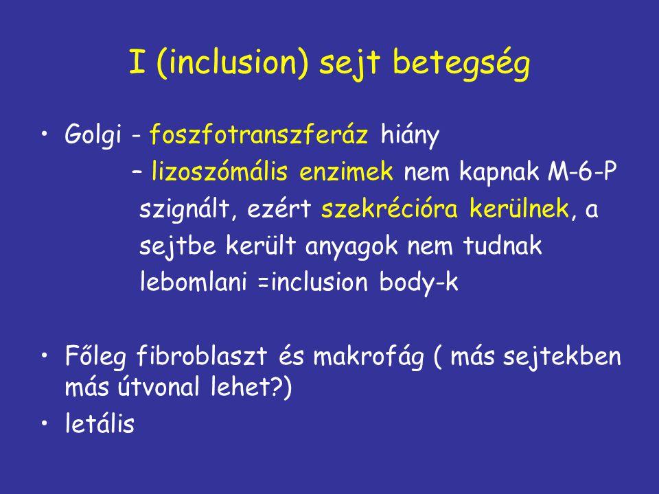 I (inclusion) sejt betegség Golgi - foszfotranszferáz hiány – lizoszómális enzimek nem kapnak M-6-P szignált, ezért szekrécióra kerülnek, a sejtbe ker