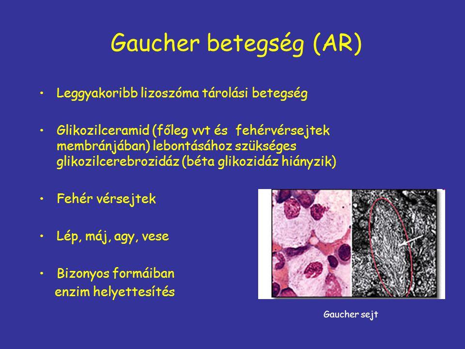 Gaucher betegség (AR) Leggyakoribb lizoszóma tárolási betegség Glikozilceramid (főleg vvt és fehérvérsejtek membránjában) lebontásához szükséges gliko