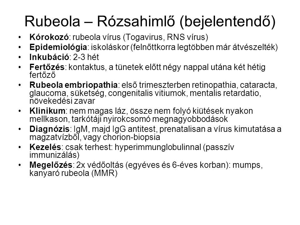 Rubeola – Rózsahimlő (bejelentendő) Kórokozó: rubeola vírus (Togavirus, RNS vírus) Epidemiológia: iskoláskor (felnőttkorra legtöbben már átvészelték)