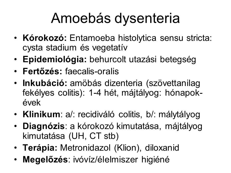 Amoebás dysenteria Kórokozó: Entamoeba histolytica sensu stricta: cysta stadium és vegetatív Epidemiológia: behurcolt utazási betegség Fertőzés: faeca