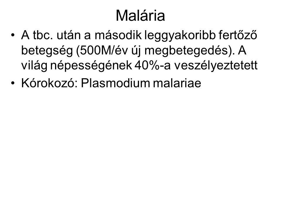 Malária A tbc. után a második leggyakoribb fertőző betegség (500M/év új megbetegedés). A világ népességének 40%-a veszélyeztetett Kórokozó: Plasmodium