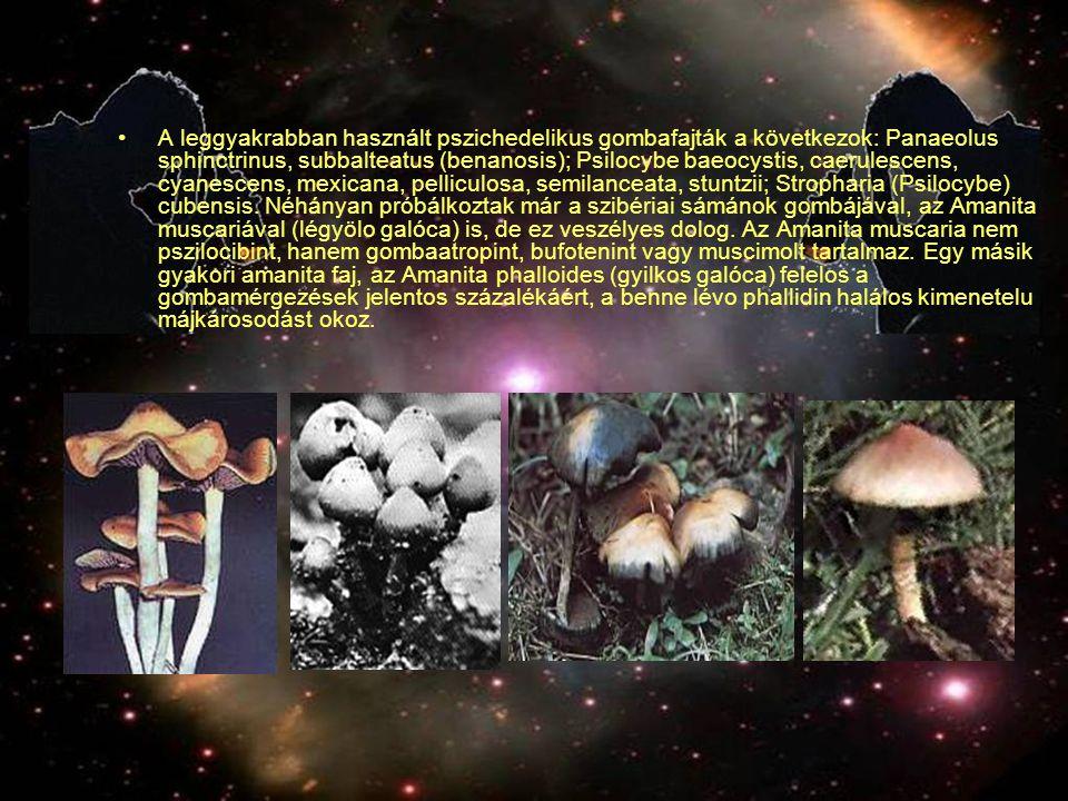 A leggyakrabban használt pszichedelikus gombafajták a következok: Panaeolus sphinctrinus, subbalteatus (benanosis); Psilocybe baeocystis, caerulescens