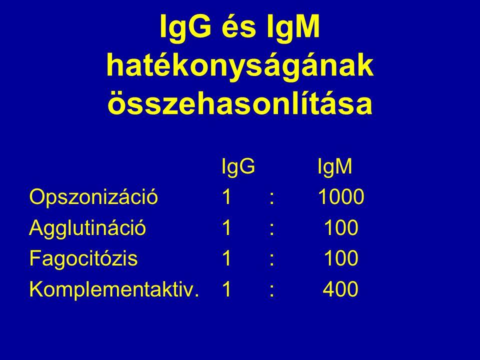 IgG és IgM hatékonyságának összehasonlítása IgGIgM Opszonizáció1:1000 Agglutináció1: 100 Fagocitózis1: 100 Komplementaktiv.1: 400