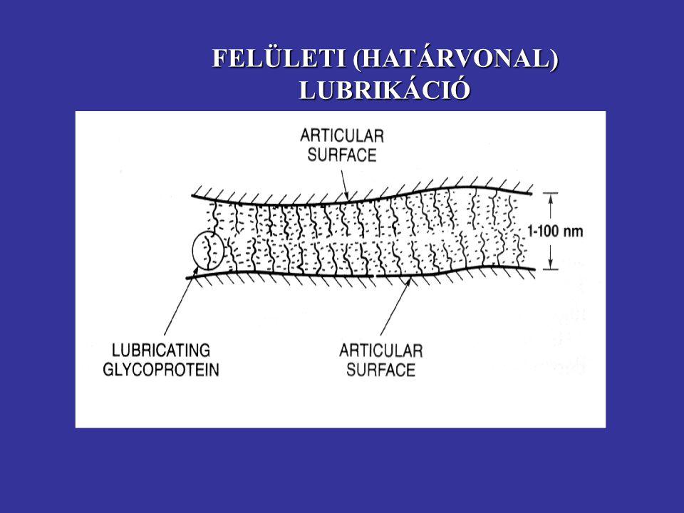 FELÜLETI (HATÁRVONAL) LUBRIKÁCIÓ Független a kenõanyag (viszkozitás) vagy a porc (keménység) fizikai tulajdonságaitól. glycoprotein, lubricin lubricin