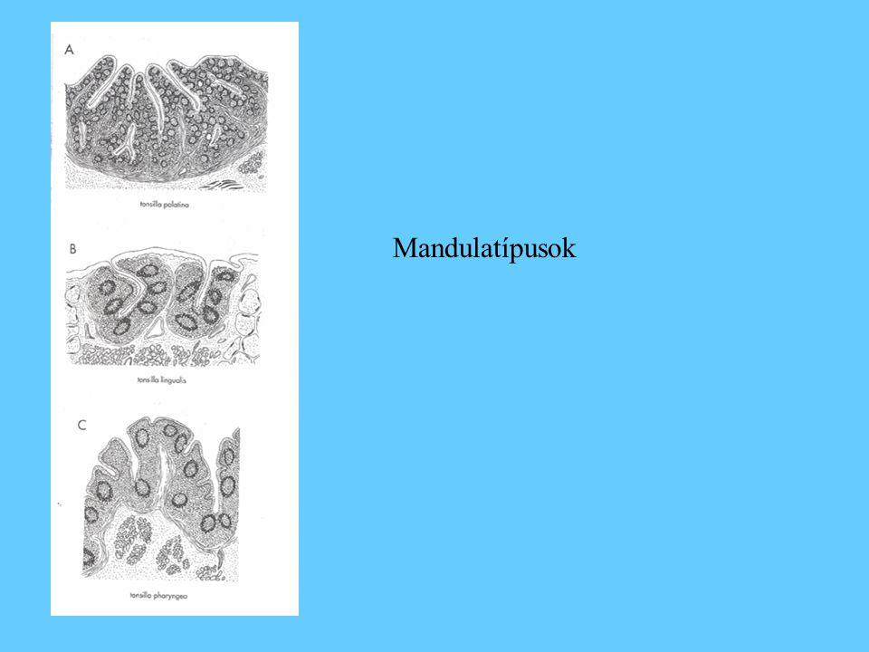Mandulatípusok
