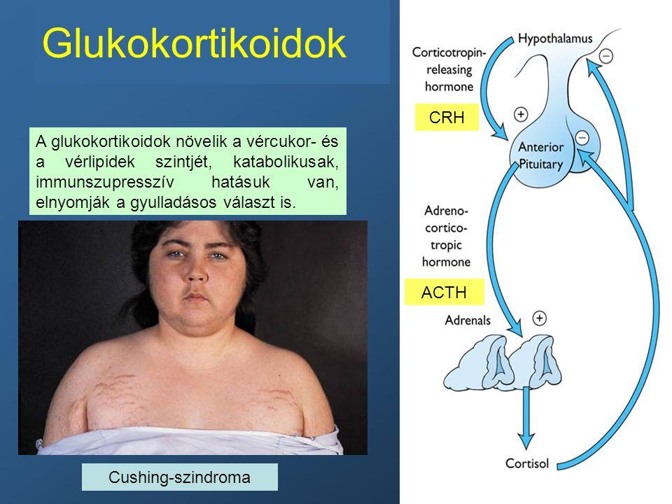 Glukokortikoidok A glukokortikoidok növelik a vércukor- és a vérlipidek szintjét, katabolikusak, immunszupresszív hatásuk van, elnyomják a gyulladásos