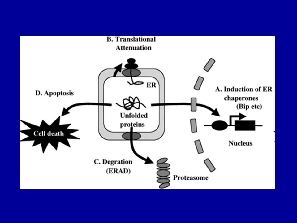 Klatrin szerkezete és a klatrin burkos vezikulum