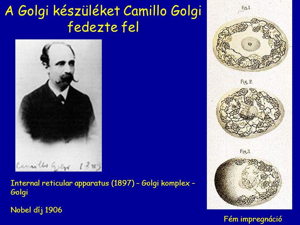 A Golgi készüléket Camillo Golgi fedezte fel Internal reticular apparatus (1897) – Golgi komplex – Golgi Nobel díj 1906 Fém impregnáció