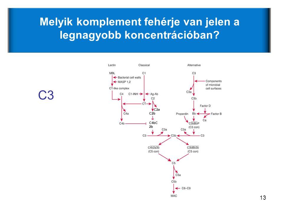 13 Melyik komplement fehérje van jelen a legnagyobb koncentrációban? C3 C4bC 2b C2b C2a