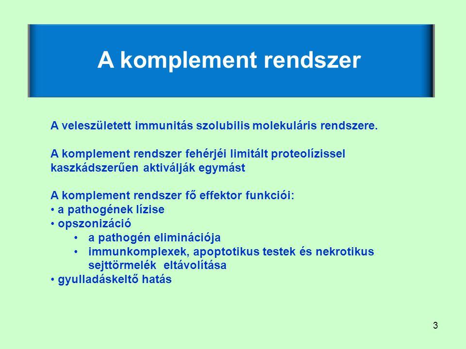 3 A komplement rendszer A veleszületett immunitás szolubilis molekuláris rendszere. A komplement rendszer fehérjéi limitált proteolízissel kaszkádszer