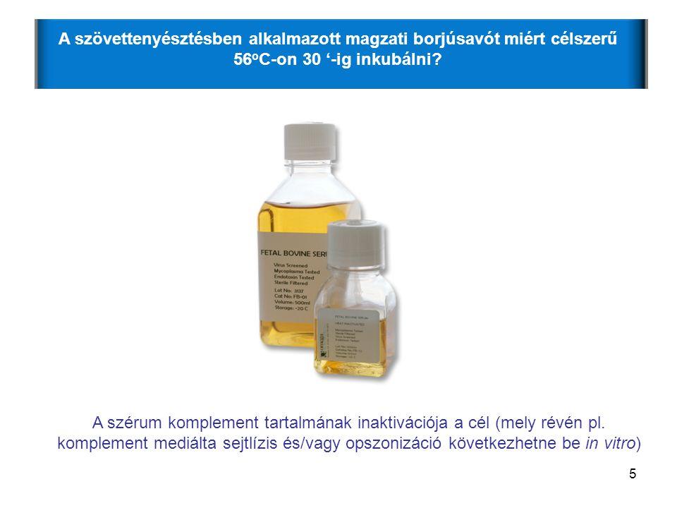36 1) A természetes immunválasz melyik komponensével (komponenseivel) találkozik először az extracelluláris kórokozó legnagyobb valószínűséggel.