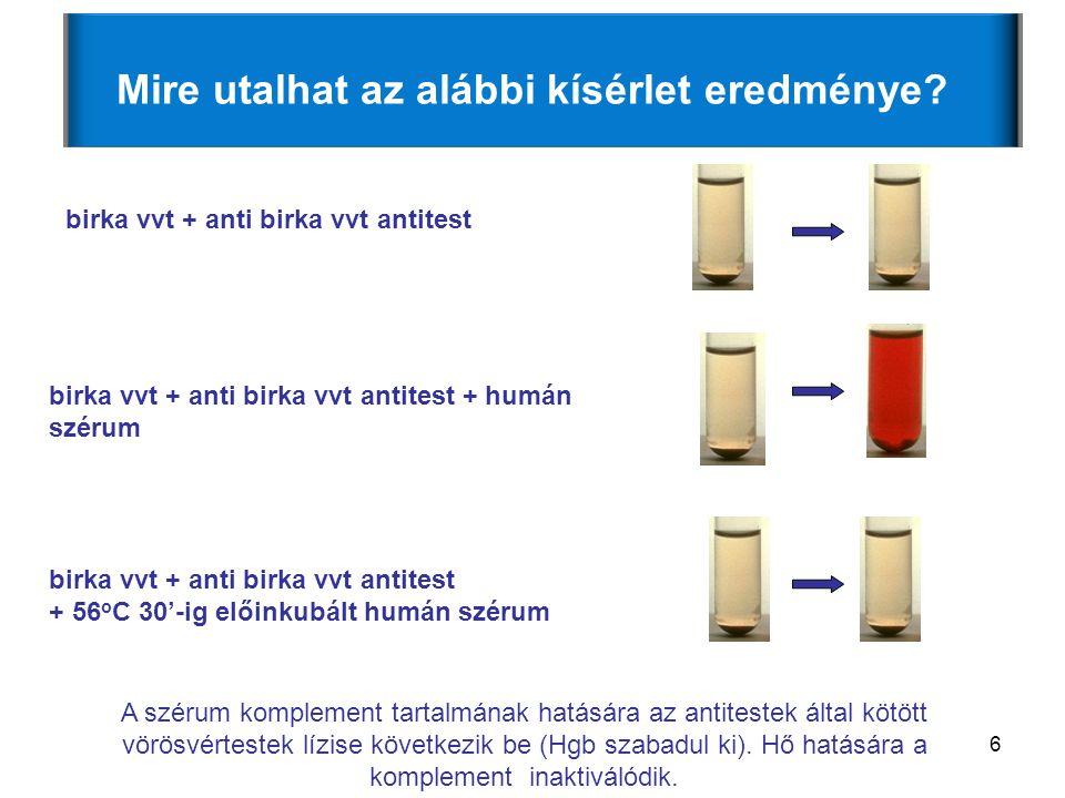 6 Mire utalhat az alábbi kísérlet eredménye? birka vvt + anti birka vvt antitest birka vvt + anti birka vvt antitest + humán szérum birka vvt + anti b