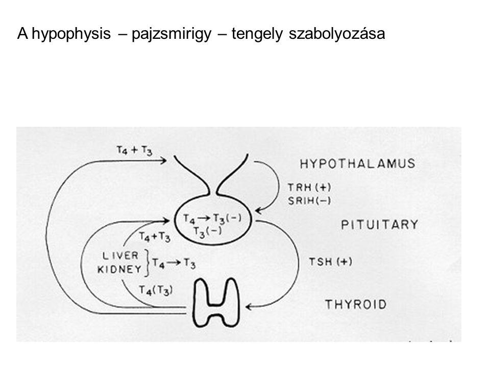 Pajzsmirigy ellenes autoantitestek TPO (thyroid peroxidase) ellenes antitest a pajzsmirigy autoimmun betegségeinek általános markere TSH-receptor ellenes antitest: az immunhyperthyreosis oka = stimulálja a TSH receptort