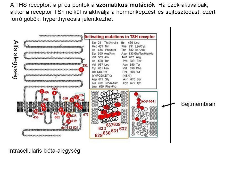 A hirsutismusok differenciálása: CAH Congenitalis adrenalis hyperplasia: leggyakrabban 21-hidroxiláz enzim elégtelenség Oka: a gén-pseudogén-átrendeződés.