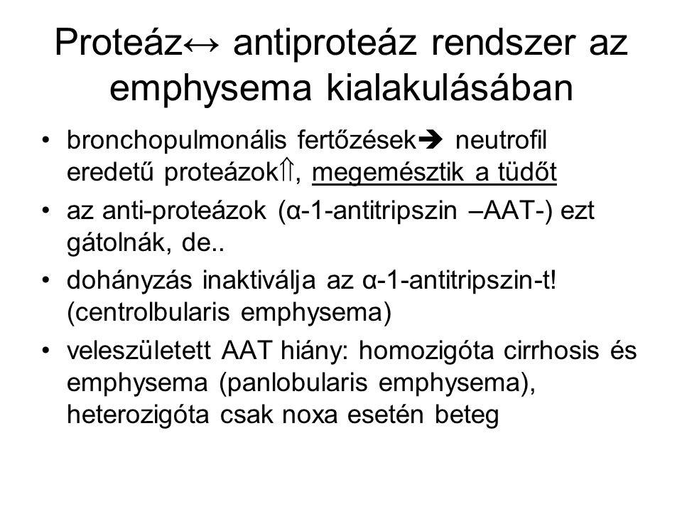 Proteáz↔ antiproteáz rendszer az emphysema kialakulásában bronchopulmonális fertőzések  neutrofil eredetű proteázok , megemésztik a tüdőt az anti-proteázok (α-1-antitripszin –AAT-) ezt gátolnák, de..