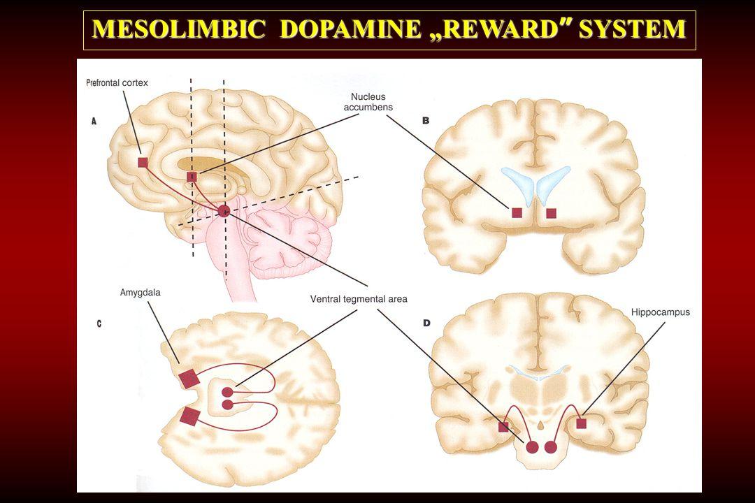 "MESOLIMBIC DOPAMINE ""REWARD"" SYSTEM"