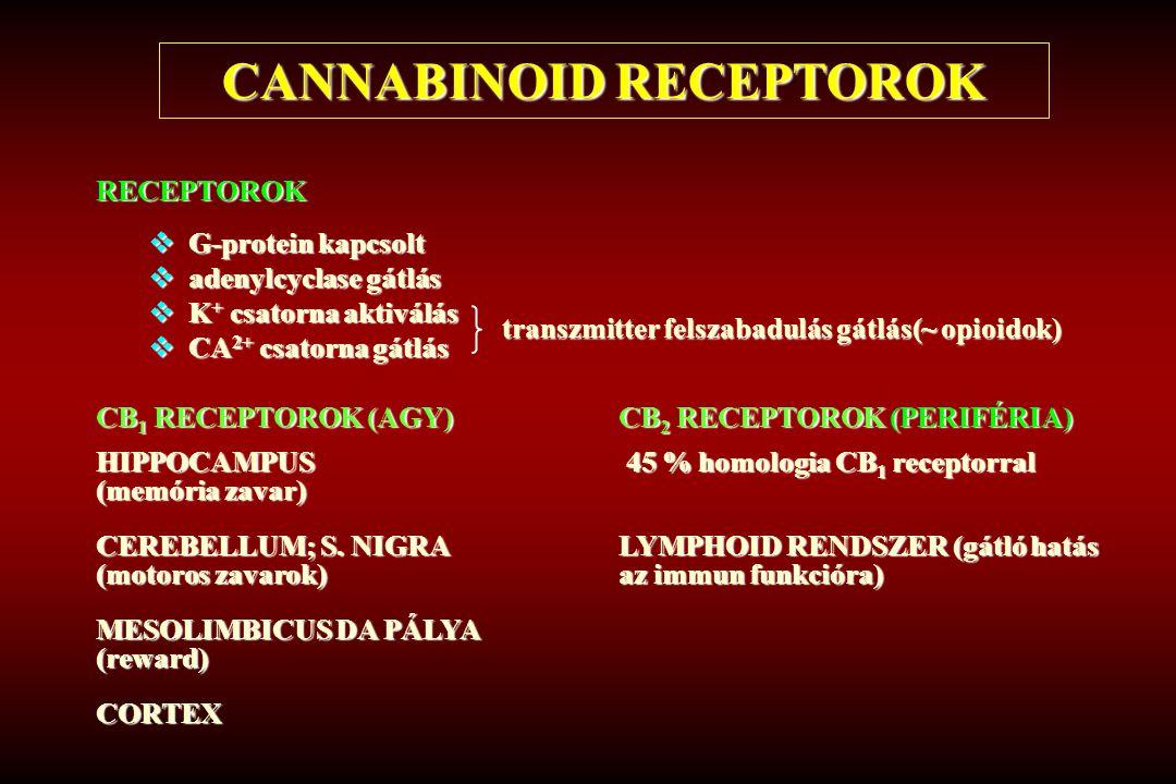 CANNABINOID RECEPTOROK RECEPTOROK  G-protein kapcsolt  adenylcyclase gátlás  K + csatorna aktiválás  CA 2+ csatorna gátlás CB 1 RECEPTOROK (AGY)CB