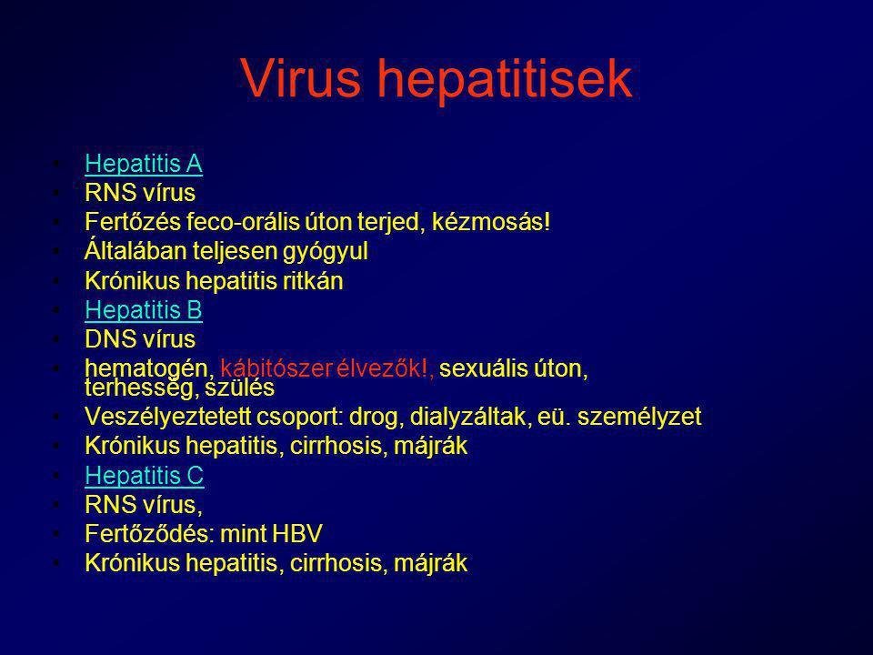 Virus hepatitisek Hepatitis A RNS vírus Fertőzés feco-orális úton terjed, kézmosás! Általában teljesen gyógyul Krónikus hepatitis ritkán Hepatitis B D
