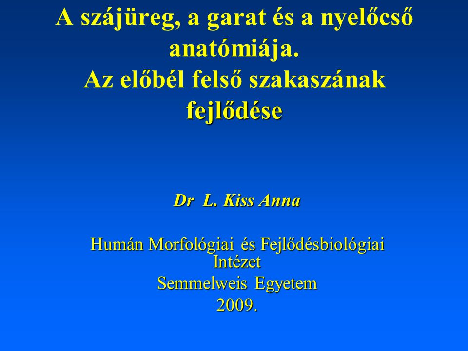 Nyálmirigyek II. parotis gl. submandibularis