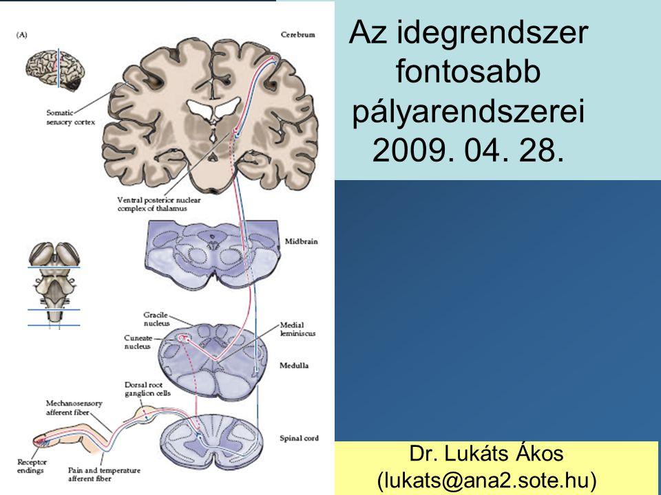 Az idegrendszer fontosabb pályarendszerei 2009. 04. 28. Dr. Lukáts Ákos (lukats@ana2.sote.hu)