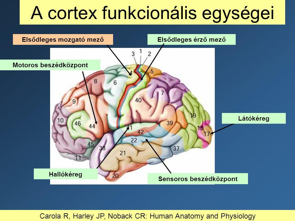 Elsődleges érző mező A cortex funkcionális egységei Látókéreg Elsődleges mozgató mező Motoros beszédközpont Sensoros beszédközpont Hallókéreg Carola R