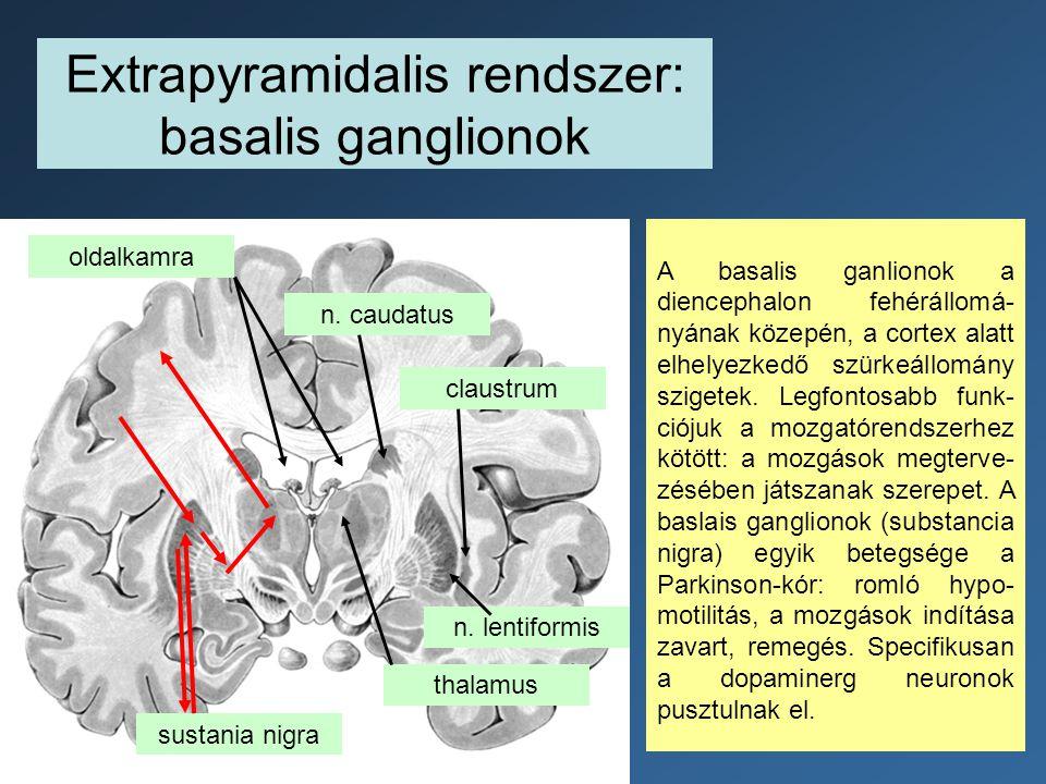 Extrapyramidalis rendszer: basalis ganglionok oldalkamra n. caudatus n. lentiformis claustrum A basalis ganlionok a diencephalon fehérállomá- nyának k