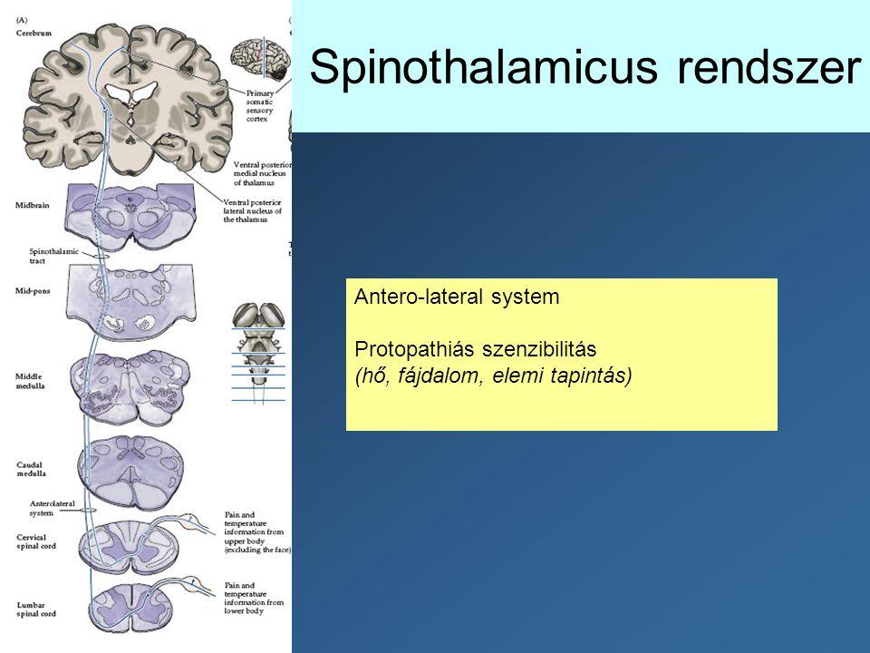 Spinothalamicus rendszer Antero-lateral system Protopathiás szenzibilitás (hő, fájdalom, elemi tapintás)