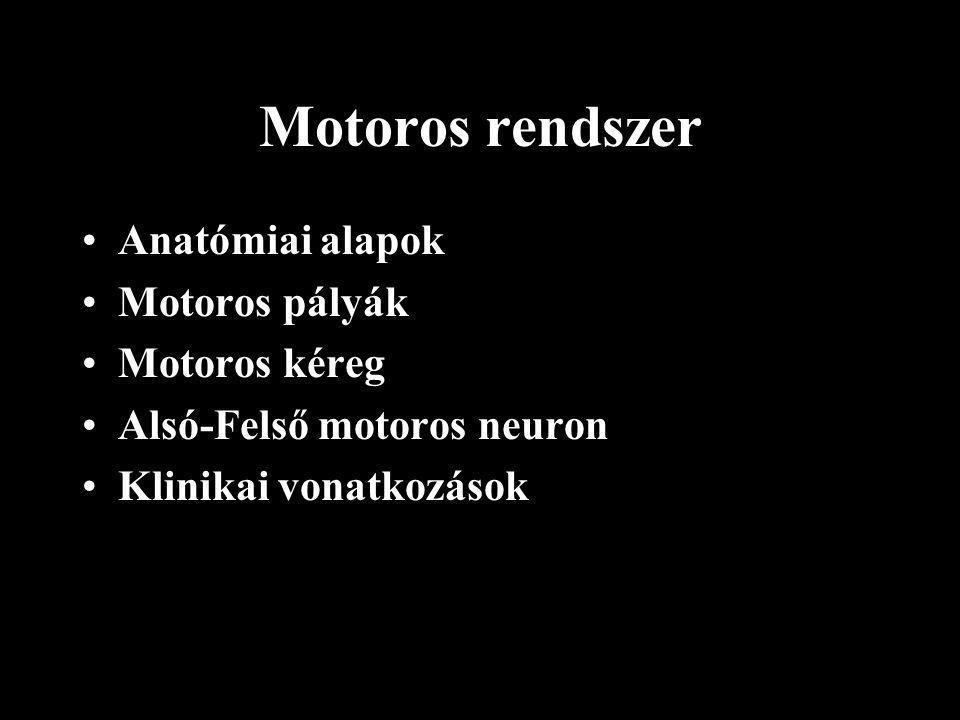 Motoros rendszer Anatómiai alapok Motoros pályák Motoros kéreg Alsó-Felső motoros neuron Klinikai vonatkozások