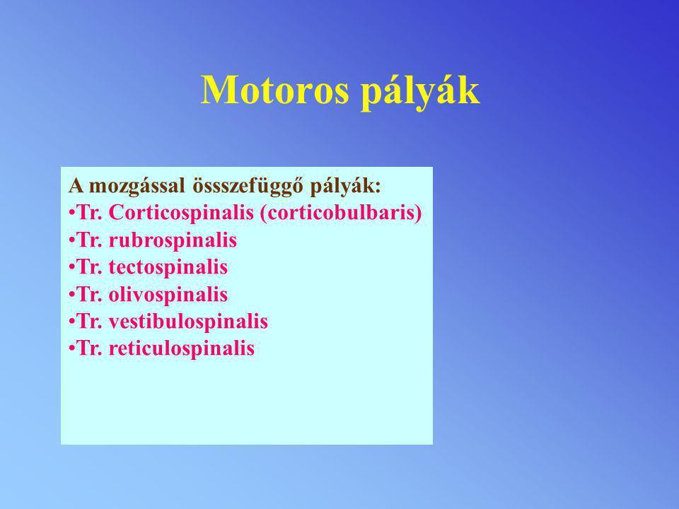 Motoros pályák A mozgással össszefüggő pályák: Tr. Corticospinalis (corticobulbaris) Tr. rubrospinalis Tr. tectospinalis Tr. olivospinalis Tr. vestibu