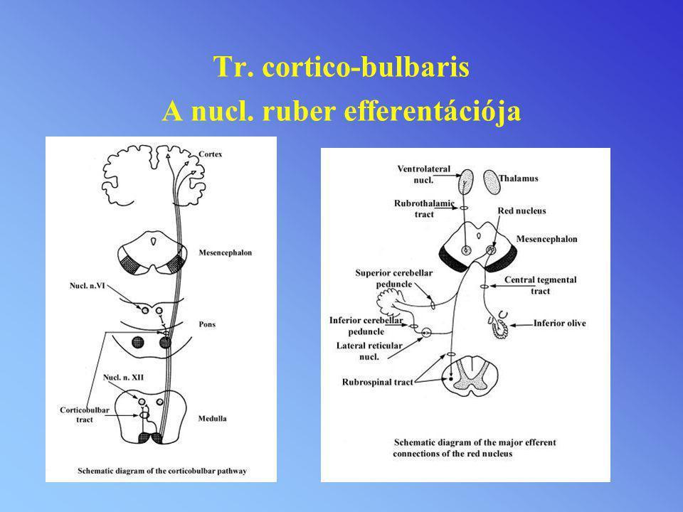 Tr. cortico-bulbaris A nucl. ruber efferentációja