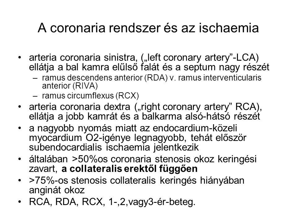 """A coronaria rendszer és az ischaemia arteria coronaria sinistra, (""""left coronary artery""""-LCA) ellátja a bal kamra elűlső falát és a septum nagy részét"""