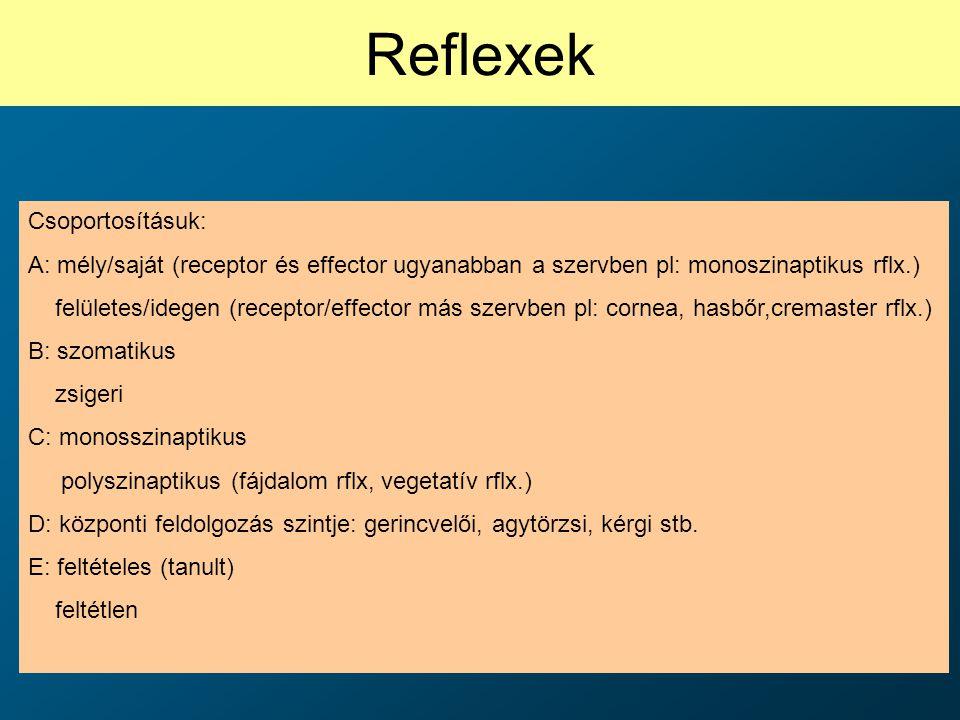 Reflexek Csoportosításuk: A: mély/saját (receptor és effector ugyanabban a szervben pl: monoszinaptikus rflx.) felületes/idegen (receptor/effector más
