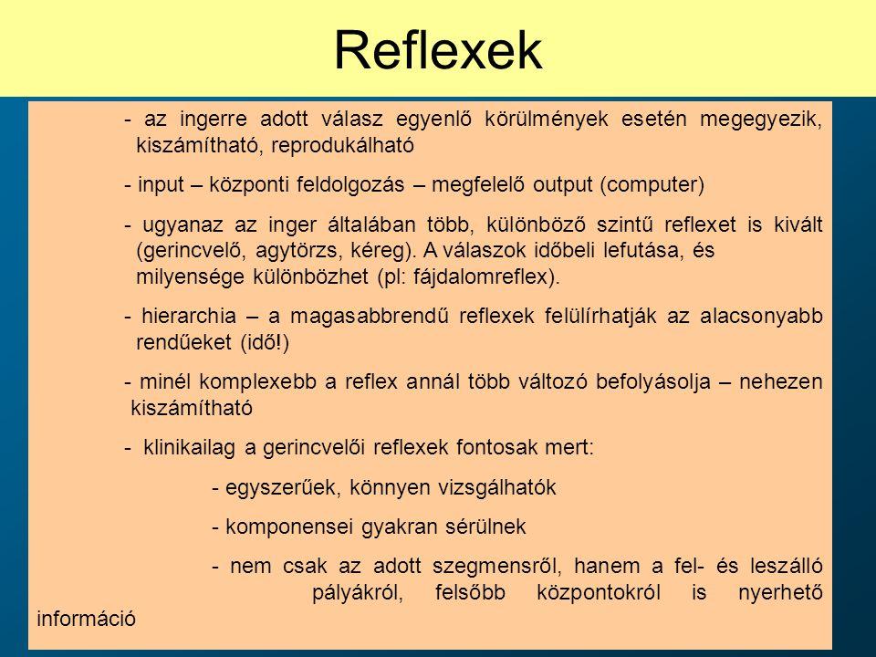 Reflexek - az ingerre adott válasz egyenlő körülmények esetén megegyezik, kiszámítható, reprodukálható - input – központi feldolgozás – megfelelő outp