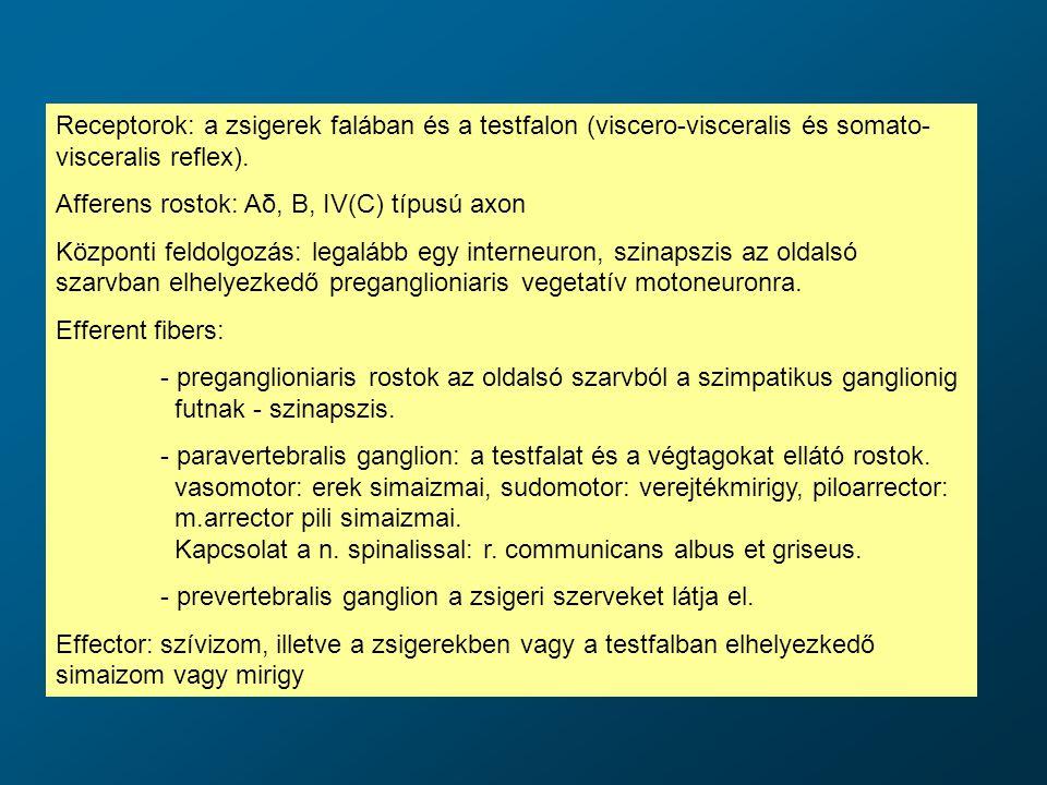 Receptorok: a zsigerek falában és a testfalon (viscero-visceralis és somato- visceralis reflex). Afferens rostok: Aδ, B, IV(C) típusú axon Központi fe