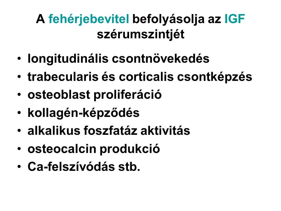 A fehérjebevitel befolyásolja az IGF szérumszintjét longitudinális csontnövekedés trabecularis és corticalis csontképzés osteoblast proliferáció kolla