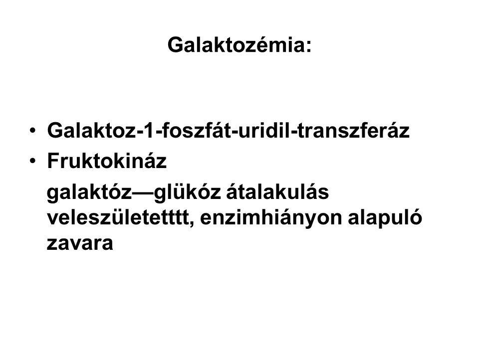 Galaktozémia: Galaktoz-1-foszfát-uridil-transzferáz Fruktokináz galaktóz—glükóz átalakulás veleszületetttt, enzimhiányon alapuló zavara