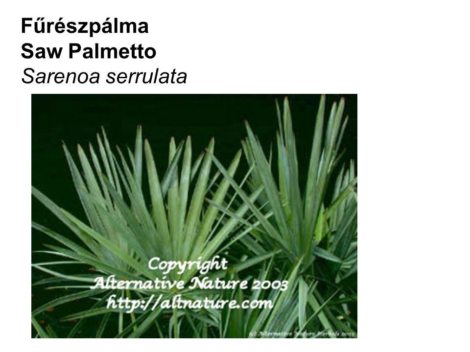 Fűrészpálma Saw Palmetto Sarenoa serrulata
