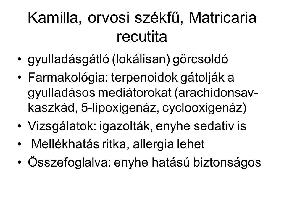 Kamilla, orvosi székfű, Matricaria recutita gyulladásgátló (lokálisan) görcsoldó Farmakológia: terpenoidok gátolják a gyulladásos mediátorokat (arachi