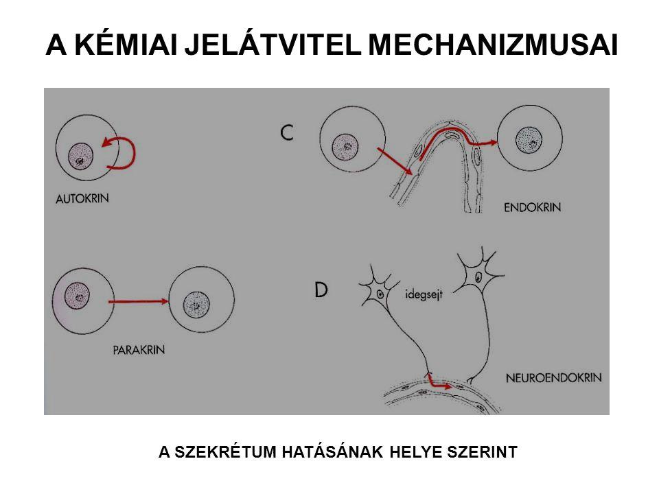 A SZEKRÉTUM HATÁSÁNAK HELYE SZERINT A KÉMIAI JELÁTVITEL MECHANIZMUSAI