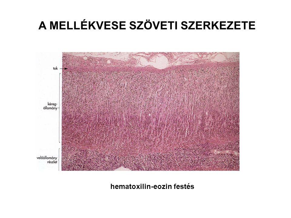 A MELLÉKVESE SZÖVETI SZERKEZETE hematoxilin-eozin festés