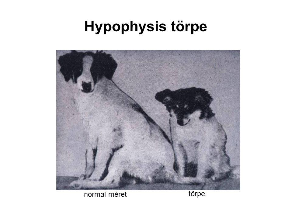 Hypophysis törpe normal méret törpe
