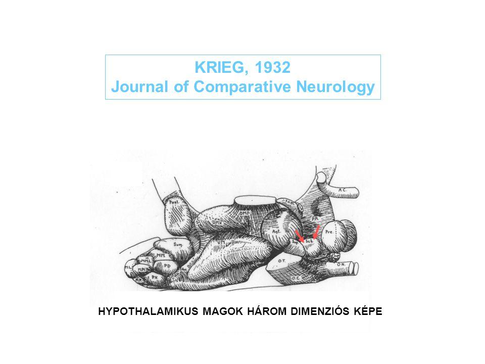 KRIEG, 1932 Journal of Comparative Neurology HYPOTHALAMIKUS MAGOK HÁROM DIMENZIÓS KÉPE