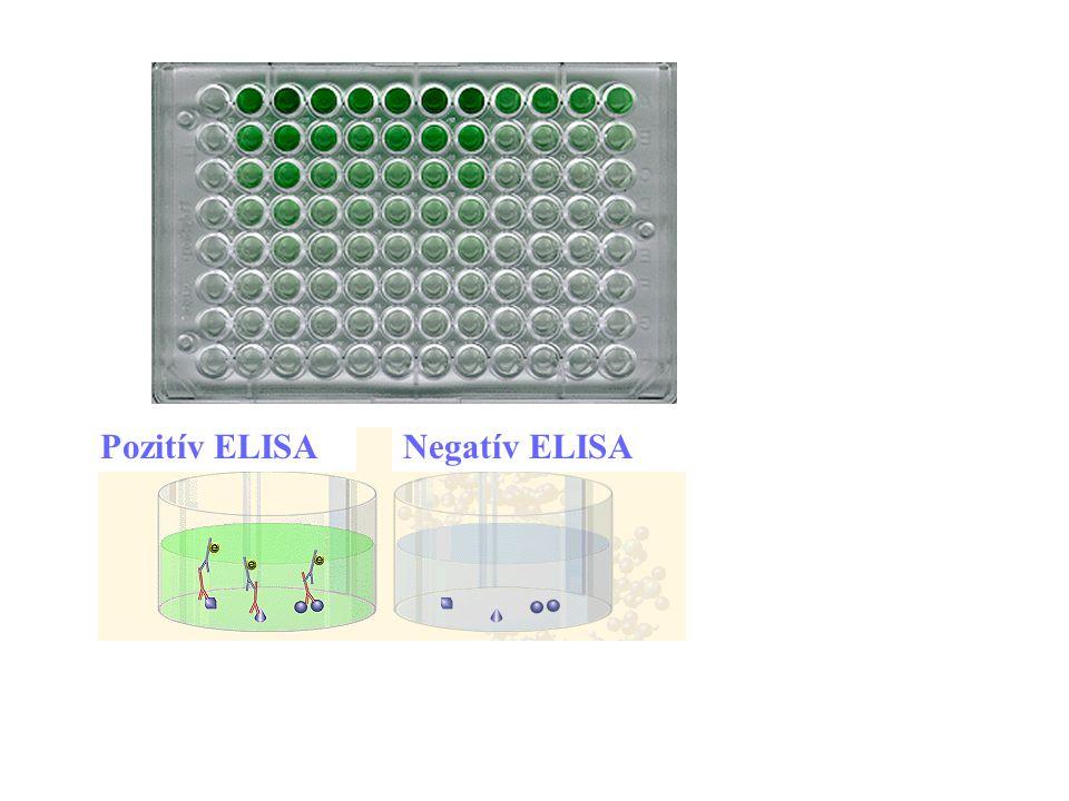15 Pozitív ELISANegatív ELISA