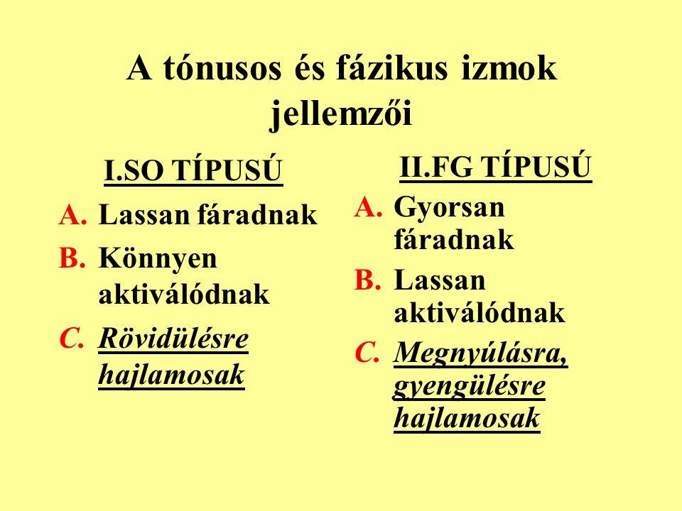 A tónusos és fázikus izmok jellemzői I.SO TÍPUSÚ A.Lassan fáradnak B.Könnyen aktiválódnak C.Rövidülésre hajlamosak II.FG TÍPUSÚ A.Gyorsan fáradnak B.L