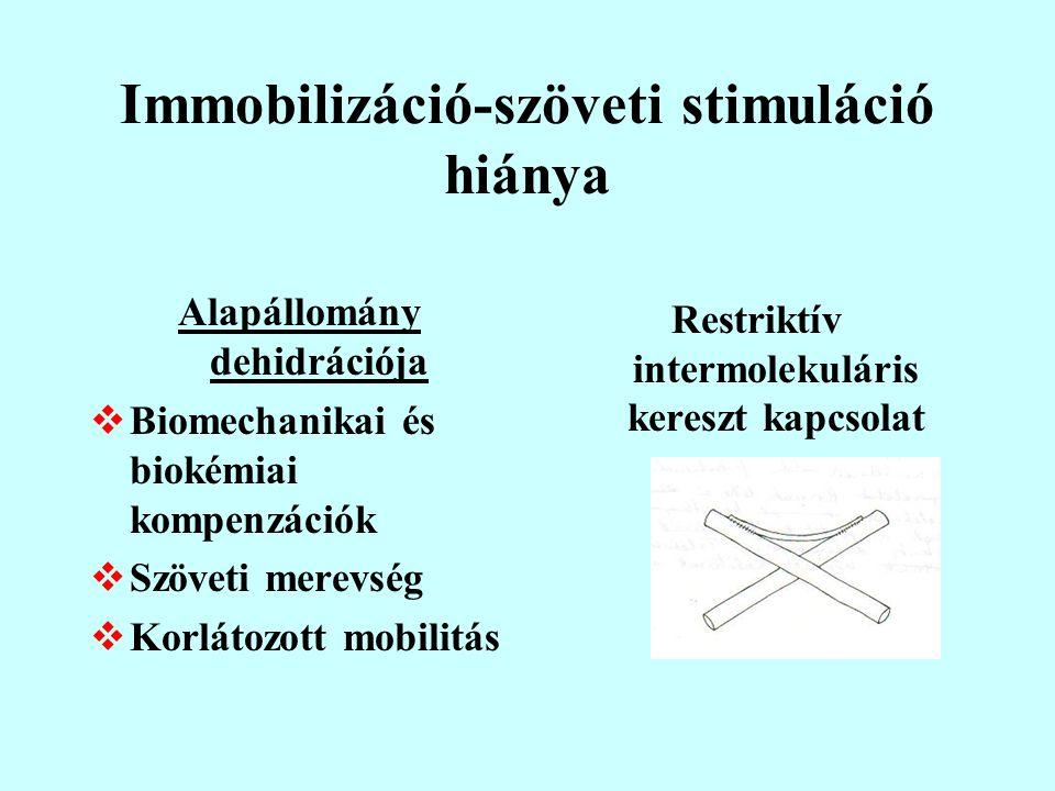 Immobilizáció-szöveti stimuláció hiánya Alapállomány dehidrációja  Biomechanikai és biokémiai kompenzációk  Szöveti merevség  Korlátozott mobilitás