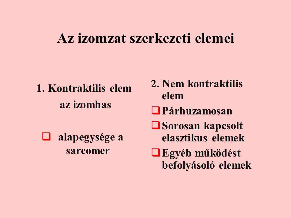 Az izomzat szerkezeti elemei 1. Kontraktilis elem az izomhas  alapegysége a sarcomer 2. Nem kontraktilis elem  Párhuzamosan  Sorosan kapcsolt elasz