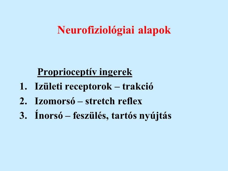 Neurofiziológiai alapok Proprioceptív ingerek 1.Izületi receptorok – trakció 2.Izomorsó – stretch reflex 3.Ínorsó – feszülés, tartós nyújtás